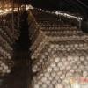 本基地现有大量高温平菇,鸡腿菇栽培种(三级种),菌包出售