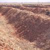 安徽玉米芯大量供应
