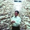 杏鲍菇工厂化技术服务
