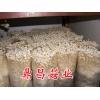 工厂化生产白色金针菇