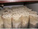 白色金针菇工厂化栽培 (3)