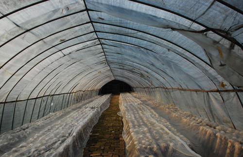 蘑菇養殖大棚的設計