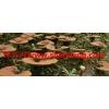 哪有榆黄磨 草菇 猴头菌 香菇等多种蘑菇