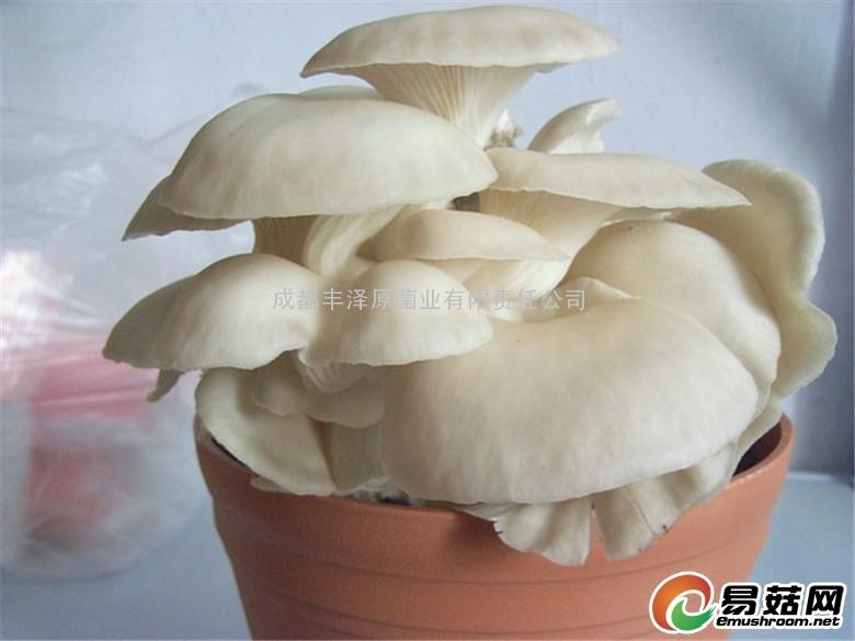 公司菇类基地菇类图 (25)