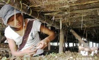 临沧市勐托大寨傣族村民从福建引进姬松茸种植技术获成功