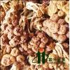 食用菌香菇滑子菇批发滑子菇厂家直销