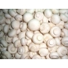 供应双饱蘑菇草菇菌种