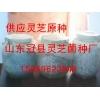供應泰山赤靈芝菌種