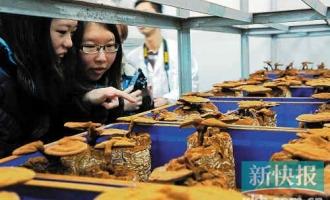 广东省微生物研究所举办交流会 专家提醒不要误食毒蘑菇