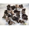 出售毛木耳平菇菌种