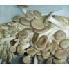 秀珍菇菌种