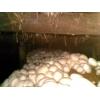 提供双孢菇,草菇栽培技术服务