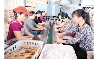 光泽县:木制品厂转化种植海鲜菇