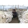 纯长稻麦草生料种菌高墙式(三代技术)