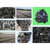 黑木耳冷库-毛木耳养殖冷库建造-野生食用菌冷藏保温库设计厂家