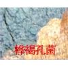 桦树黄 猪苓 五味子 刺五加籽