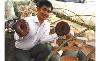 孙杨:灵芝种植打开海宁市场