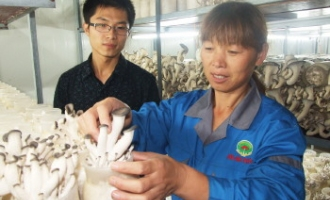 康瑞betvlctor伟德公司生产姬菇产值超亿元