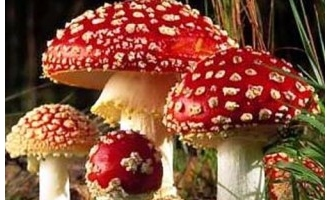 2012年第三季度全国食物中毒2382人 毒蘑菇成罪魁祸首