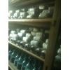 供应茶树菇,杏胞菇,银耳,金针,平菇,秀珍菇等菌种