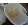 白灵菇最新价格 最新行情 河北白灵菇
