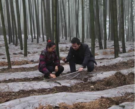 竹荪种植技术_图为科技人员在富兴乡桂兰村给群众讲解竹林下的竹海长裙竹荪种植技术