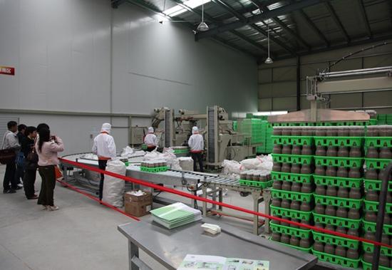 漳浦金针菇瓶栽工厂(二) (4)