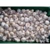 出售干双孢蘑菇