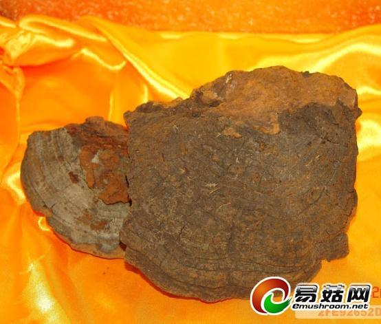 www.lingzhibaozifen.cc