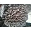 供应高温平菇,秀珍菇,菌种菌棒