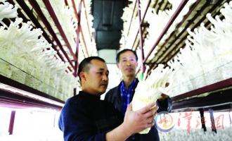 徐晓东:努力让枣阳海鲜菇走向全国