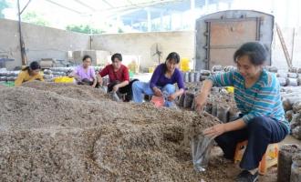 梁平县留守妇女在betvlctor伟德基地务工月收入2000多元