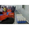 牛肝菌输送设备