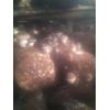 优质三级香菇菌种预售中