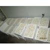 河北承德供应鲜品双孢菇、金针菇
