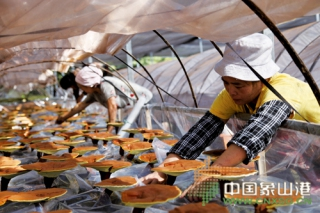 象山县首批椴木仿野生灵芝引种成功