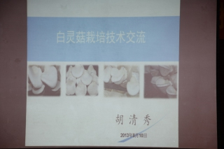 体系技术交流:胡清秀,白灵菇栽培技术交流 (2)