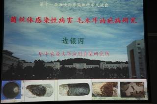 主题报告:边银丙,食用菌菌丝体侵染性病害—毛木耳油疤病研究 (4)