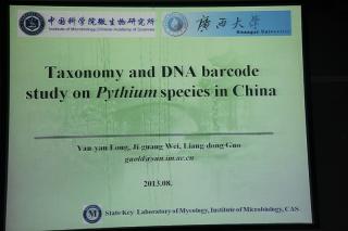 主题报告:龙艳艳,腐霉属的分子系统学及DNA条形码研究 (3)