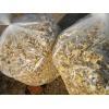 大量出售榆黄蘑干品
