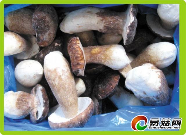 速冻牛肝菌整菇
