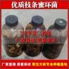 供应优质枝条蜜环菌,快速长菌丝蜜环菌