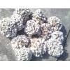 白参菌、雪莲菌、金耳