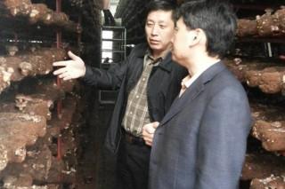 中国食用菌协会高会长一行调研红黑大战文化村建设情况