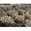 姬菇菌种菌棒