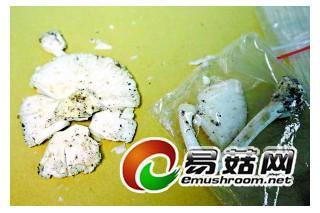 郊游采蘑菇毒倒一家人 医生提醒勿随意采食野生蘑菇