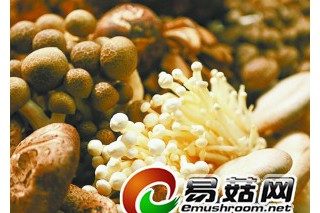 """""""蘑菇重金属说""""引发北京市场蘑菇滞销"""