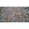 中小型双孢菇烘干蘑菇烘干四川食用菌烘干机