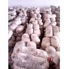 山东供应高产抗病平菇,秀珍菇菌种,出菇菌棒