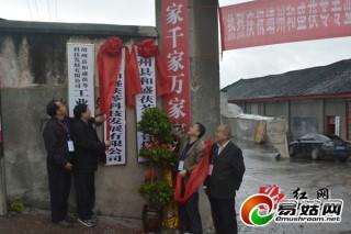 靖州县和盛茯苓专业合作社成立